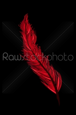 stock vector: a red feather-Raw Stock Photo ID: 23997