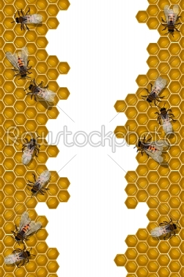 stock vector: bees working frame-Raw Stock Photo ID: 24112