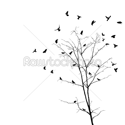 stock vector: birds and tree silhouettes-Raw Stock Photo ID: 24131
