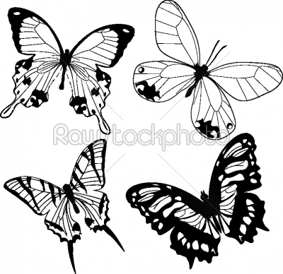 stock vector: black and white butterflies-Raw Stock Photo ID: 24086
