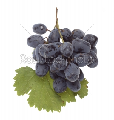stock photo: bulgarian blue grape cluster with leaves  -Raw Stock Photo ID: 9961