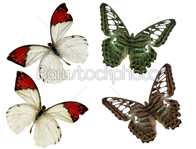 stock photo: butterfly-Raw Stock Photo ID: 23117