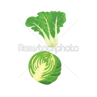 stock vector: cabbage and vegetables-Raw Stock Photo ID: 27690
