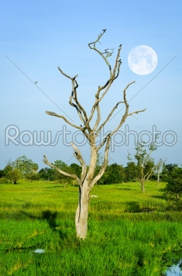 stock photo: dead wood-Raw Stock Photo ID: 32048