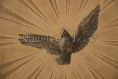 stock photo: dove on the sun rays-Raw Stock Photo ID: 11811