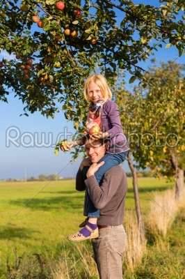 stock photo: father and daughter picking apple in autumn or fall-Raw Stock Photo ID: 46577