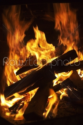 stock photo: fire and tree-Raw Stock Photo ID: 9882