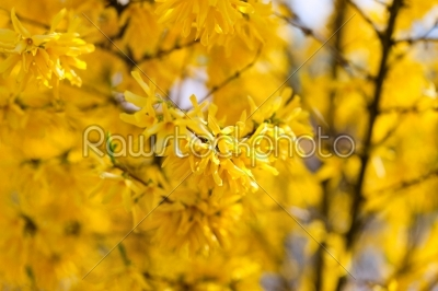 stock photo: flowers and blossom in spring-Raw Stock Photo ID: 39496