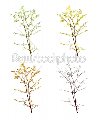 stock vector: four seasons-Raw Stock Photo ID: 24463