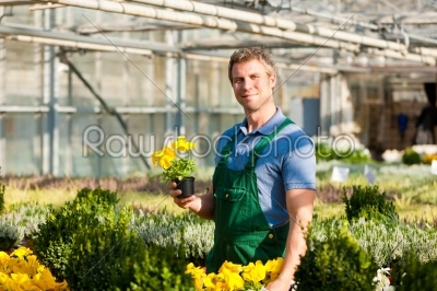 stock photo: gardener in market garden or nursery-Raw Stock Photo ID: 43107