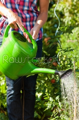 stock photo: gardening in summer  woman watering plants-Raw Stock Photo ID: 42552