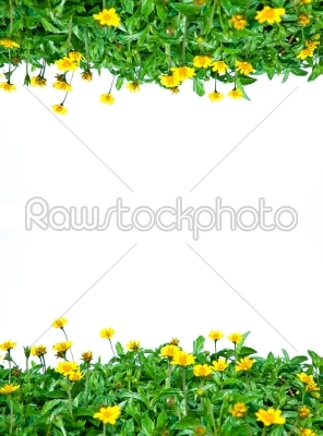 stock photo: green line-Raw Stock Photo ID: 31701