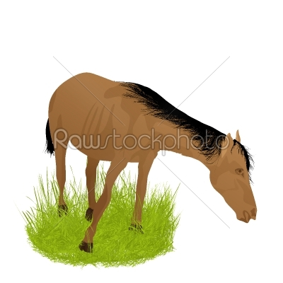 stock vector: horse in the grass-Raw Stock Photo ID: 24566