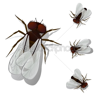 stock vector: house fly-Raw Stock Photo ID: 24569