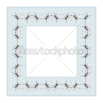 stock vector: mosquito frame-Raw Stock Photo ID: 24666