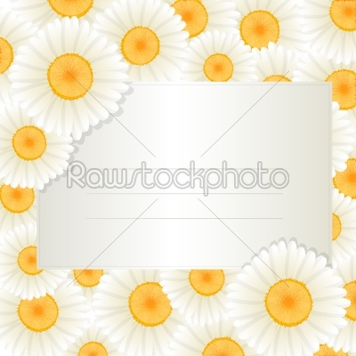 stock vector: oxeye daisy text card-Raw Stock Photo ID: 24716