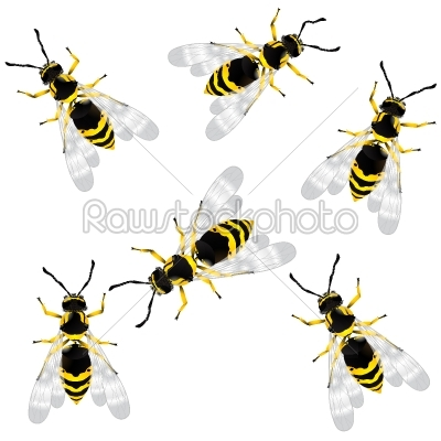 stock vector: realistic wasp-Raw Stock Photo ID: 25036