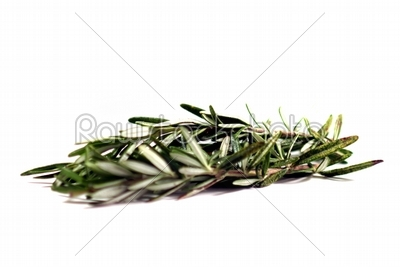 stock photo: rosemary-Raw Stock Photo ID: 34286