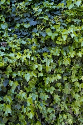 stock photo: texture of leafs-Raw Stock Photo ID: 28538