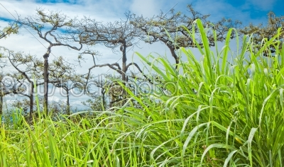 stock photo: tropical forest with green grass foreground-Raw Stock Photo ID: 31579