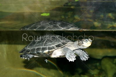 stock photo: turtle-Raw Stock Photo ID: 29948