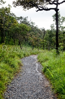 stock photo: walkway in forest-Raw Stock Photo ID: 31578