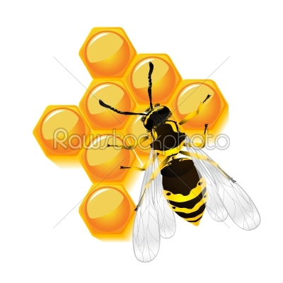 stock vector: wasp and honeycomb-Raw Stock Photo ID: 25035