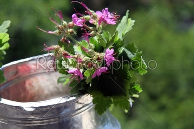 stock photo: water jug decorated with geraniums-Raw Stock Photo ID: 28377
