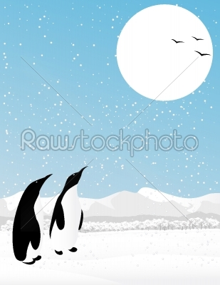 stock vector: winter scene with penguins-Raw Stock Photo ID: 24966