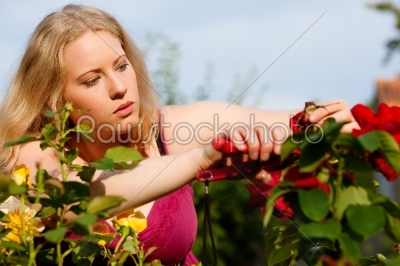 stock photo: woman working on roses in garden-Raw Stock Photo ID: 39129