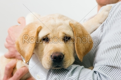 stock photo: adorable dog puppy resting on arm-Raw Stock Photo ID: 50126