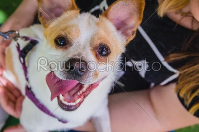 stock photo: adorable jack russell terrier dog in the park looking at camera-Raw Stock Photo ID: 75097