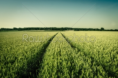 stock photo: agriculture field-Raw Stock Photo ID: 66288