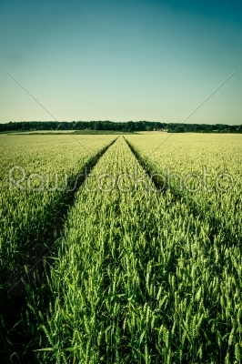 stock photo: agriculture field-Raw Stock Photo ID: 66289