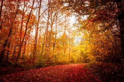 stock photo: autumn landscape-Raw Stock Photo ID: 66463