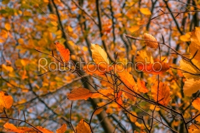 stock photo: autumn leaves in in a colorful forest-Raw Stock Photo ID: 66147