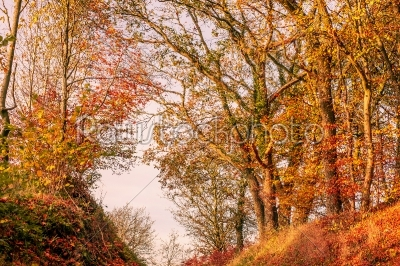 stock photo: autumn leaves in in a forest scenery-Raw Stock Photo ID: 66150
