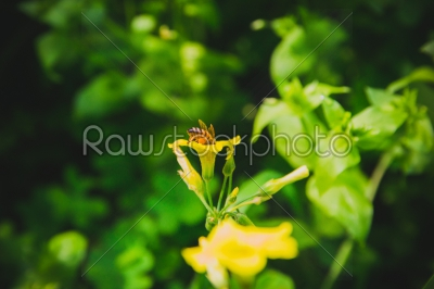 stock photo: bee on yellow flower-Raw Stock Photo ID: 75150