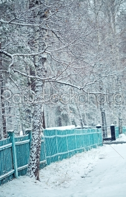stock photo: birch forest in winter and blue fence-Raw Stock Photo ID: 68273