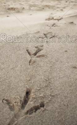 stock photo: bird footprints on sand beach-Raw Stock Photo ID: 75152