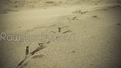 stock photo: bird footprints on sand beach-Raw Stock Photo ID: 75155