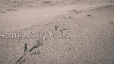 stock photo: bird footprints on sand beach-Raw Stock Photo ID: 75157