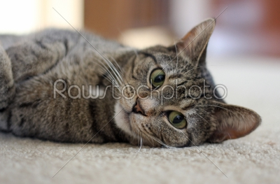 stock photo: cat relaxed-Raw Stock Photo ID: 74991
