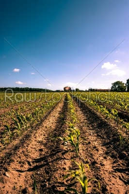 stock photo: countryside field crops-Raw Stock Photo ID: 66258