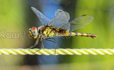 stock photo: dragonflycloseup-Raw Stock Photo ID: 67137