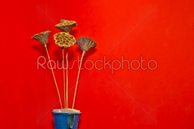 stock photo: dry floral decoration in vase to red wall-Raw Stock Photo ID: 55273