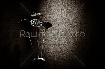 stock photo: dry floral decoration in vase to wall-Raw Stock Photo ID: 55278