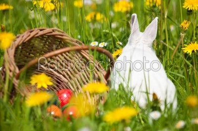 stock photo: easter bunny on meadow with basket and eggs-Raw Stock Photo ID: 51244