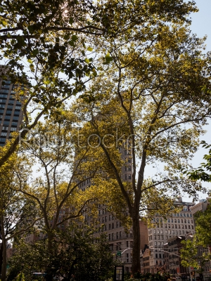 stock photo: flatiron building behind trees-Raw Stock Photo ID: 74990