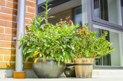 stock photo: flower pots on a terrace-Raw Stock Photo ID: 69767